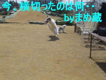 IMG_2418.jpg