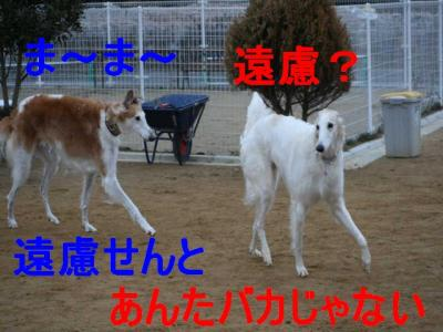 IMG_2731.jpg