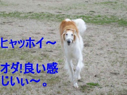 IMG_2965.jpg