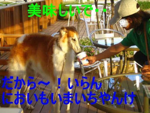 IMG_3402.jpg
