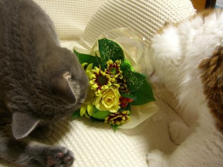 お花とメイバロ