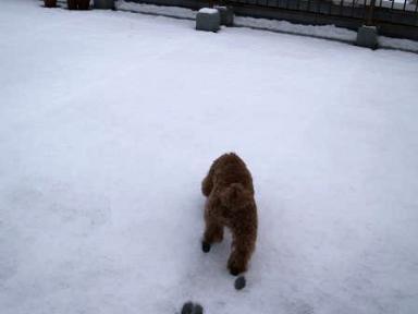 ローランと雪