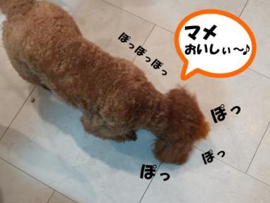 2008豆まき~