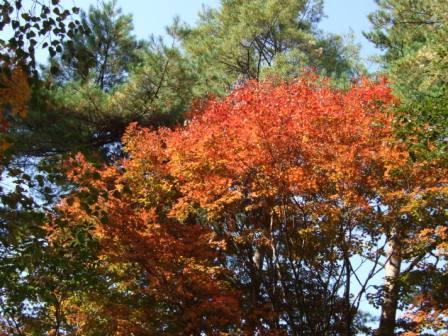 五色沼紅葉