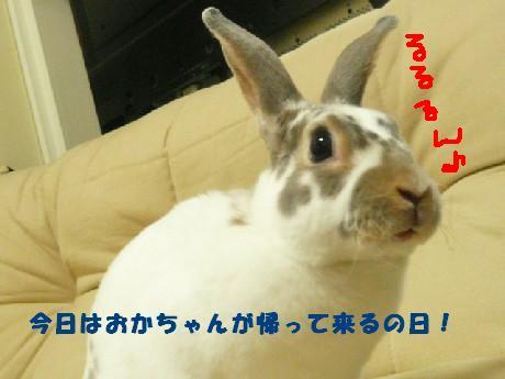 P10106831.jpg