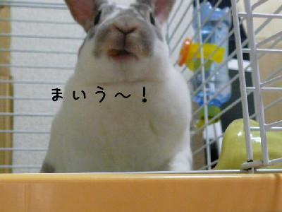 shengao2.jpg
