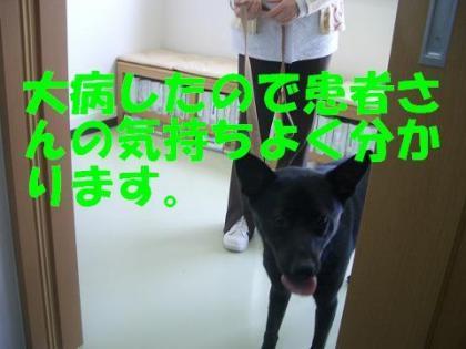 クー02_convert_20090522043837