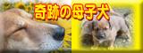 kisekinohahakoinu_b.jpg