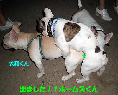 大和好きやでぇ~!