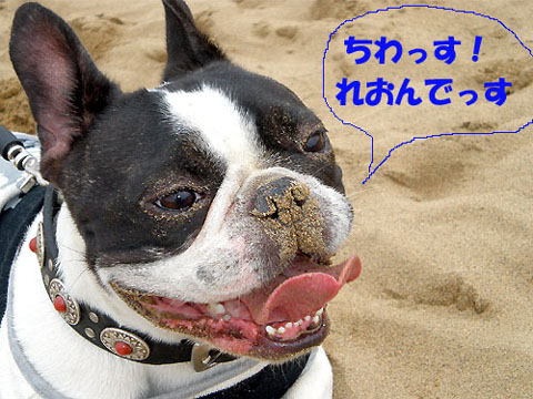砂まみれですけど・・・