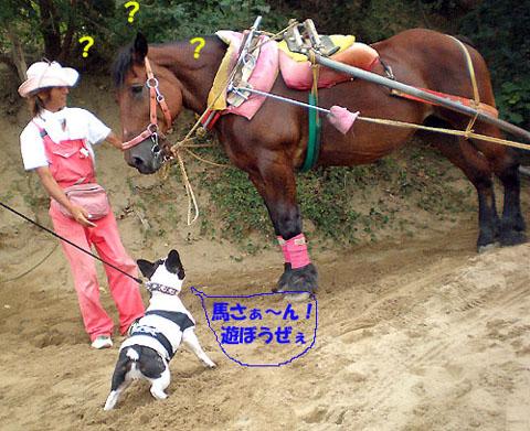 大好きな馬さん登場~!