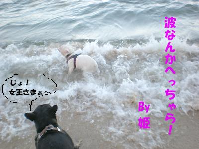 すんげぇ~闘魂魂!!