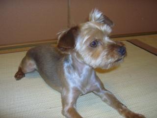 ミルキー 2008.6.14