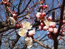 2007_0221nagoya06.jpg