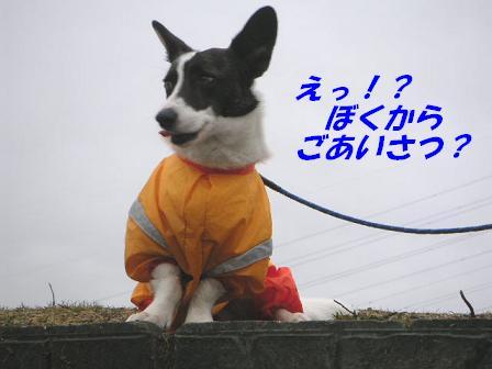 20060713025019.jpg