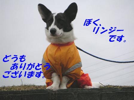 20060713025125.jpg