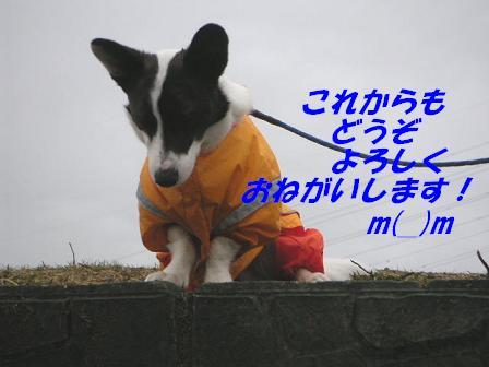 20060713025202.jpg