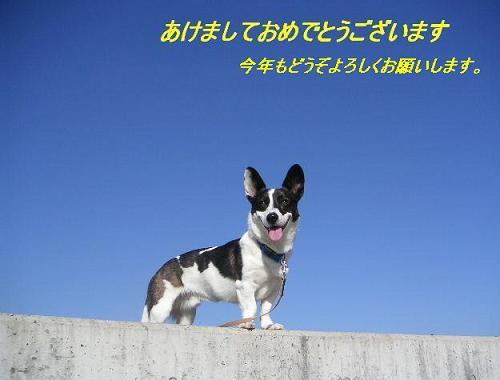 20070102013232.jpg
