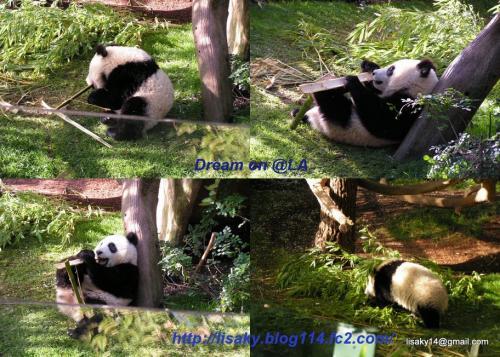 Collage panda2con