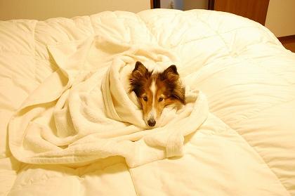 リズの寝床