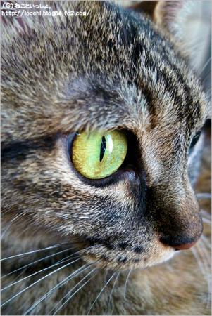 ラヴィの瞳。