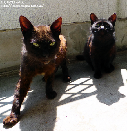 黒猫2匹。