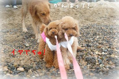 822琵琶湖4