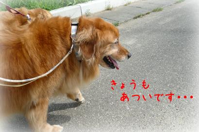 91お散歩1