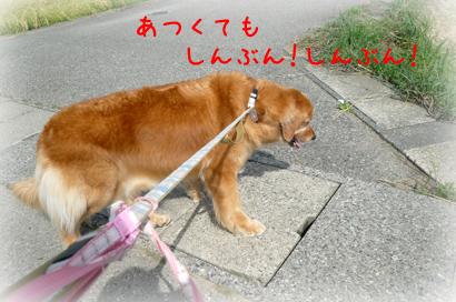 91お散歩2