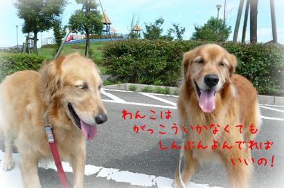 91お散歩10