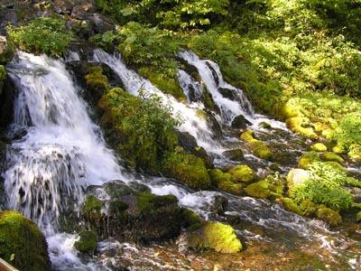 1005京極湧き水