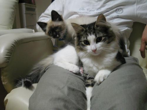 猫に好かれる人3