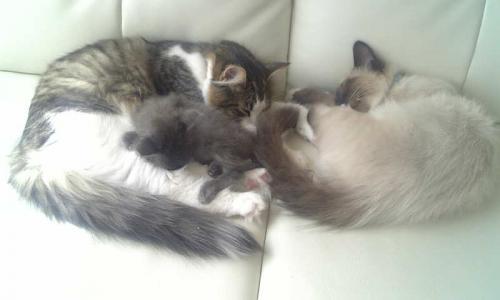 猫さんたちの様子♪