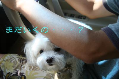 IMG_5689川11