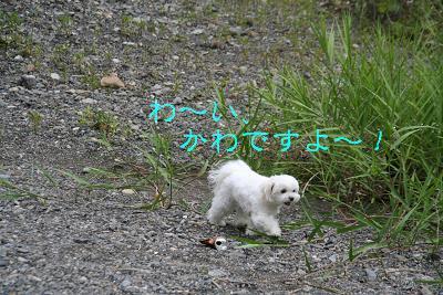 IMG_5623川5