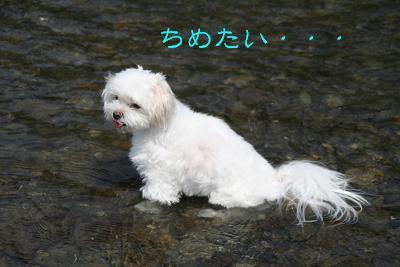 IMG_5634川5ちめたい