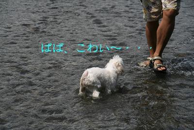 IMG_5646川8