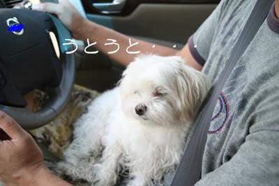 IMG_5698川12