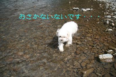 IMG_5705川12いない