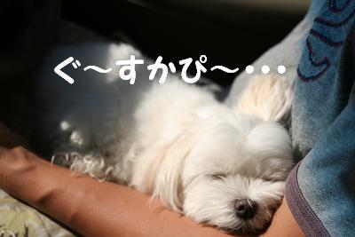 IMG_5727川グー