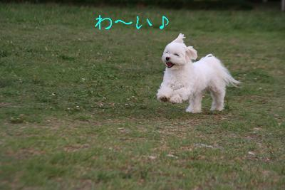 IMG_5820伊勢6