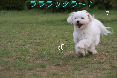 IMG_5828伊勢9