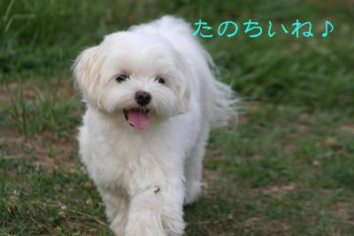 IMG_5844伊勢10