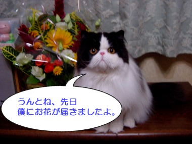 ushi07.jpg