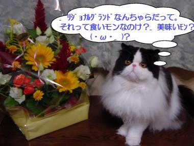 ushi08.jpg