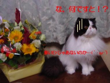 ushi09.jpg