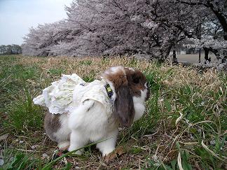 お花見心夏
