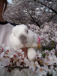 桜とBROS