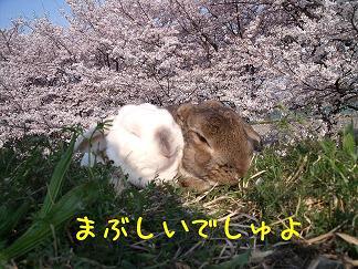 お花見瑠夏&すみれ