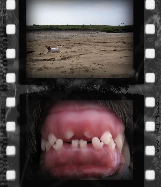 バイバイ!乳歯